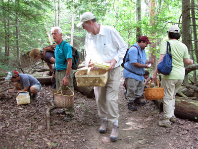Cumberland Mycological Society members gathering mushrooms at club sponsored mushroom foray